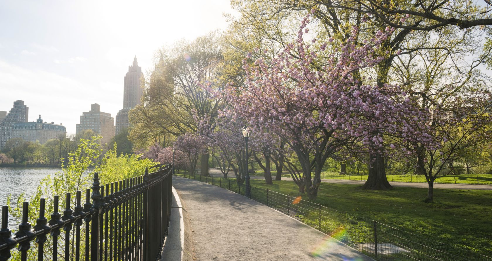 central park sidewalk in NYC